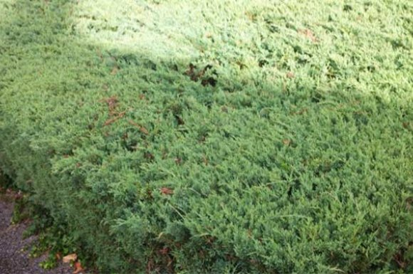 Choisir arbres planter jardin Apprieu