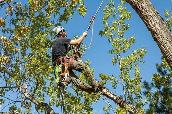 Entreprise professionnelle pour abattre un arbre de plus de 15 mètres à Apprieu