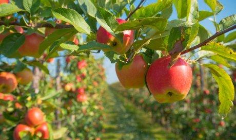 Entreprise pour la plantation d'arbres fruitiers de saison dans un jardin à Le Pin