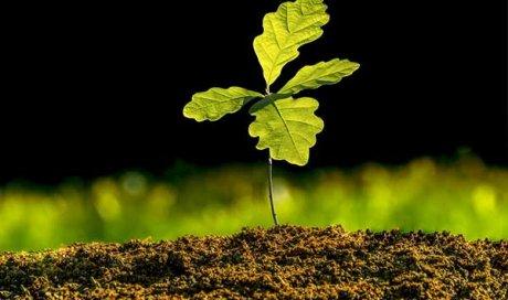 Entreprise pour planter vos arbre à Apprieu