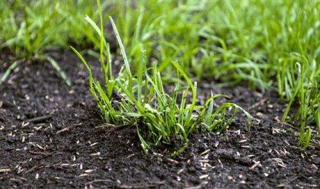 Entreprise pour le semis de gazon à Apprieu