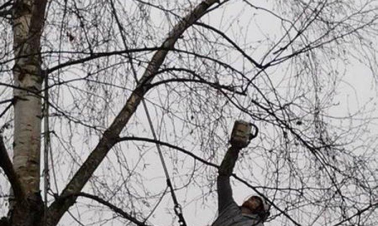 Elagage d'arbre à Apprieu